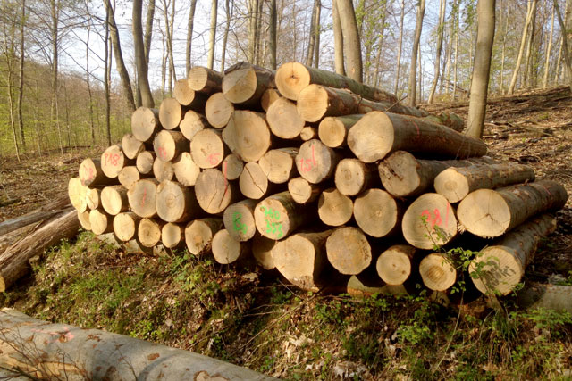 Top Brennholz - Bockelmann-Holz GmbH #DT_72